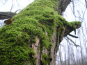 Tapeta Strom u vodárny