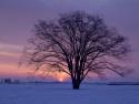 Tapeta strom večer