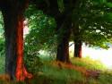 Tapeta Stromořadí