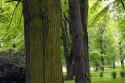 Tapeta stromy1
