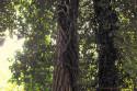 Tapeta stromy2