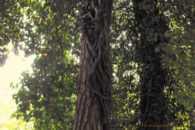 Tapeta: stromy3