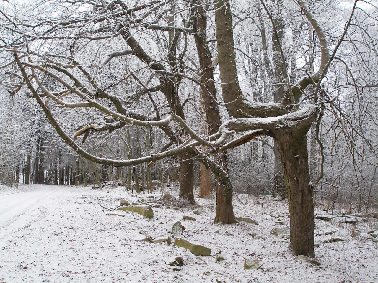 Tapeta stromy_u_hradu_rostejn_2