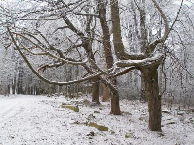 Tapeta: Stromy u hradu Roštejn 2