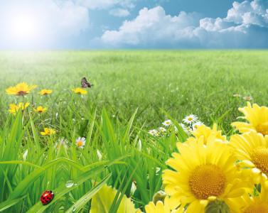 Tapeta: summer