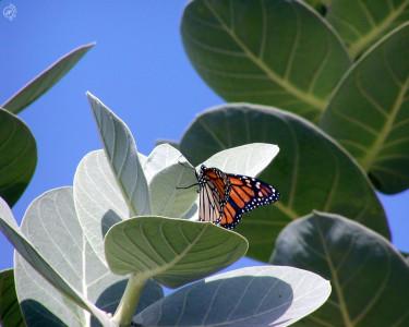 Tapeta: Sunbathing V2