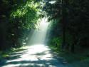 Tapeta světlo na cestě