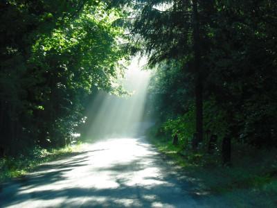 Tapeta: světlo na cestě