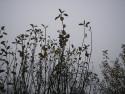Tapeta Svitavská podzimní mlha 01