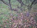 Tapeta Svitavská podzimní mlha 02