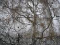 Tapeta Svitavská podzimní mlha 06