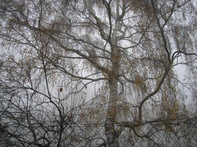 Tapeta: Svitavská podzimní mlha 06
