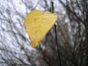Tapeta Svitavská podzimní mlha 08