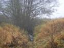 Tapeta Svitavská podzimní mlha 09