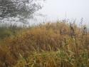 Tapeta Svitavská podzimní mlha 10
