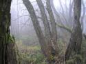 Tapeta Svitavská podzimní mlha 13