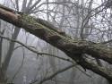Tapeta Svitavská podzimní mlha 15