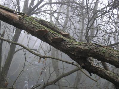 Tapeta: Svitavská podzimní mlha 15