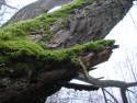 Tapeta Svitavská podzimní mlha 19