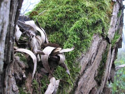 Tapeta: Svitavská podzimní mlha 20