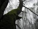 Tapeta Svitavská podzimní mlha 21