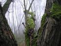 Tapeta Svitavská podzimní mlha 22
