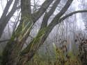 Tapeta Svitavská podzimní mlha 24