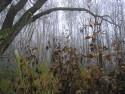 Tapeta Svitavská podzimní mlha 25