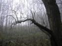 Tapeta Svitavská podzimní mlha 26