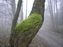 Tapeta Svitavská podzimní mlha 27