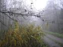 Tapeta Svitavská podzimní mlha 28