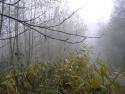 Tapeta Svitavská podzimní mlha 30