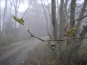 Tapeta Svitavská podzimní mlha 31