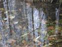 Tapeta Svitavská podzimní mlha 35
