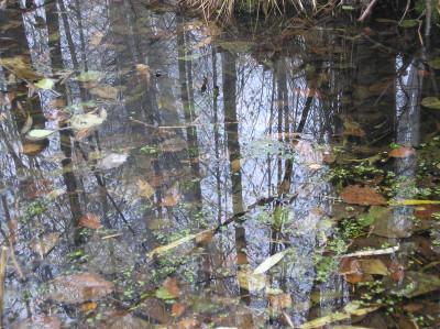 Tapeta: Svitavská podzimní mlha 35