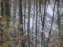 Tapeta Svitavská podzimní mlha 36