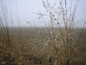 Tapeta Svitavská podzimní mlha 40