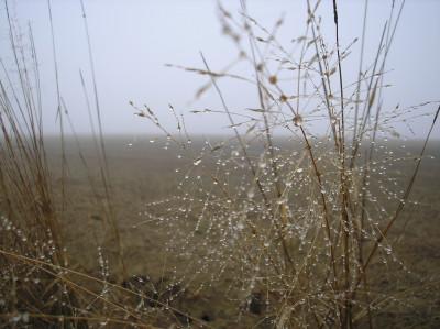 Tapeta: Svitavská podzimní mlha 40