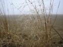 Tapeta Svitavská podzimní mlha 41