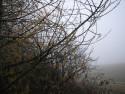 Tapeta Svitavská podzimní mlha 45