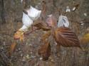 Tapeta Svitavská podzimní mlha 47