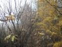 Tapeta Svitavská podzimní mlha 48