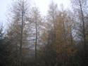 Tapeta Svitavská podzimní mlha 55