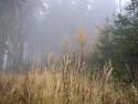Tapeta Svitavská podzimní mlha 57