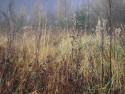 Tapeta Svitavská podzimní mlha 59