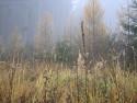 Tapeta Svitavská podzimní mlha 60