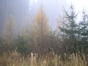 Tapeta Svitavská podzimní mlha 61