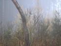 Tapeta Svitavská podzimní mlha 64
