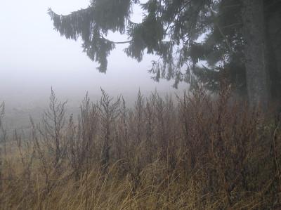 Tapeta: Svitavská podzimní mlha 65
