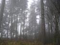 Tapeta Svitavská podzimní mlha 68